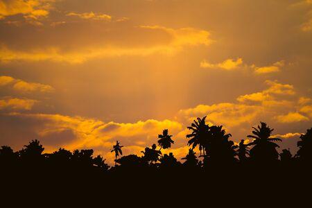 Photo pour Beautiful cloudscape with palm trees silhouettes - image libre de droit