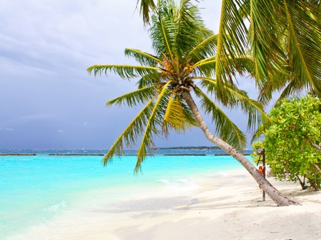 Coco palm tree on the white sand beach