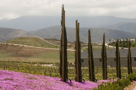 Pretty southern California wine country in Spring