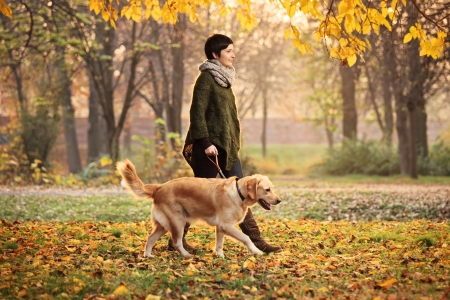Photo for A girl and her dog (Labrador retriever) walking in a park in autumn - Royalty Free Image