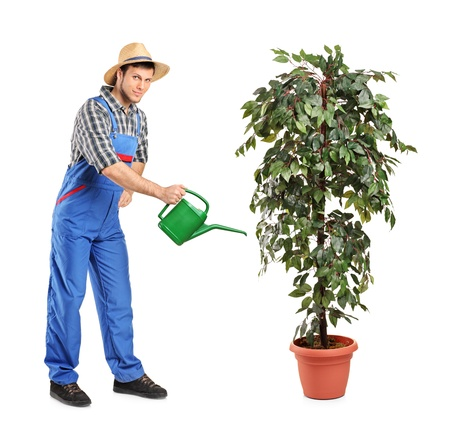 Full length portrait of a person watering a decoration plant isolated on white background