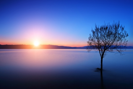 Photo pour Silhouette of tree in Ohrid lake, Macedonia at sunset - image libre de droit