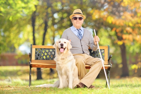 Photo pour Senior blind gentleman sitting on a wooden bench with his labrador retriever dog, in a park - image libre de droit