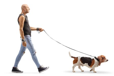 Photo for Full length profile shot of a bald man in ripped jeans walking a basset hound dog isolated on white background - Royalty Free Image
