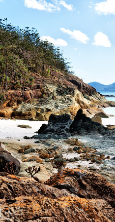 in  australia  the  beach of whitsunday island the tree and the rocks