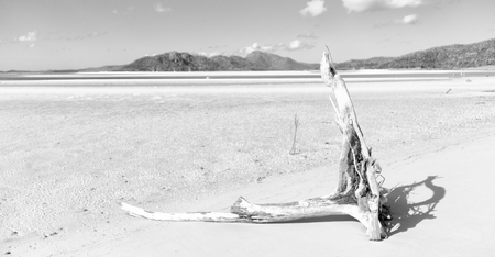 in australia whitsunday  island the tree and the beach in the paradise bay