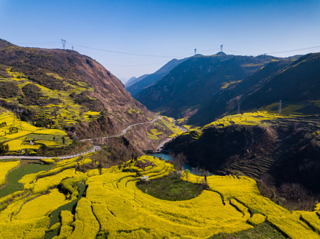 Photo pour Yellow rapeseed (canola) flower field in spring, Luoping, China - image libre de droit