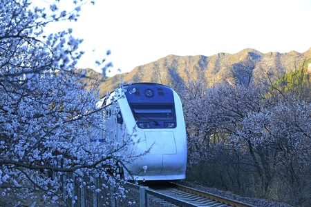 The train rides among the flowers