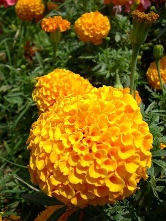 a bright orange flowers in the sun