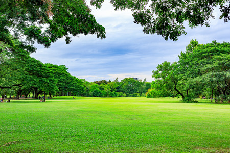 Photo for Public park background on a summer day - Royalty Free Image