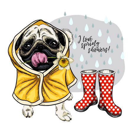 Hand drawn pug, bulldog with yellow raincoat and gumboots. Vector spring greeting card. Cute colorful dog with daffodil flower. I love spring rain. Lovely pet portrait. Poster, banner, flyer design