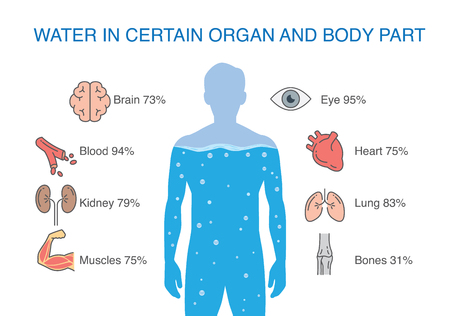 Illustration pour Water in certain organ and body part of human. Illustration about medical. - image libre de droit