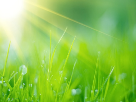Photo for Green grass under rays of sun. Closeup, shallow DOF. - Royalty Free Image