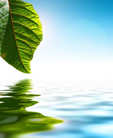 Fresh Green Leaf Over Water Background