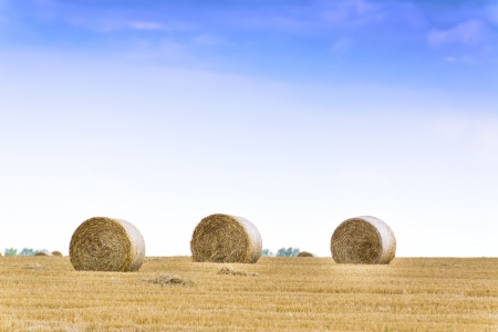 Several haystacks on the wide field  Belarus