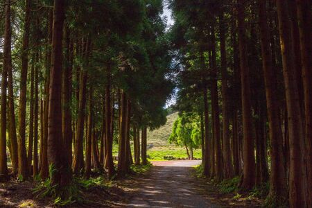 Photo pour The road in the forest near gruta do Natal in municipality of Praia da Vitoria, on the island of Terceira in Portuguese archipelago of the Azores. - image libre de droit