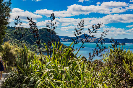 View over cliffy shore of Te Whanganui-A-Hei Marine Reserve on Northern island in New Zealand