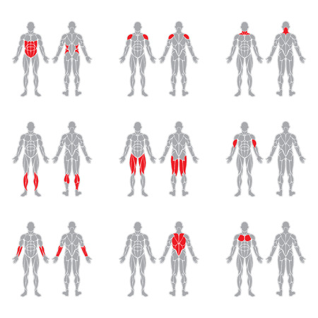 Illustration pour Human muscles silhouettes isolated on white background - image libre de droit