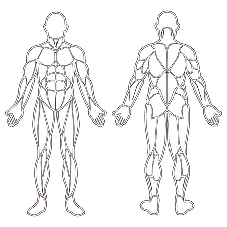 Ilustración de Human body silhouette with all muscles isolated on white - Imagen libre de derechos