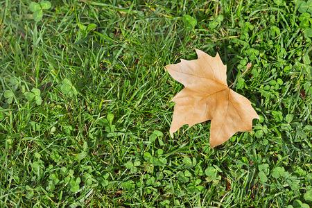 Photo pour Fall season - image libre de droit