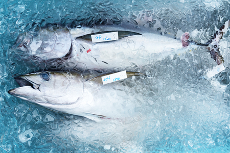 Fresh catch of tuna is packaged in a container with ice. Preparation for delivery to local markets.