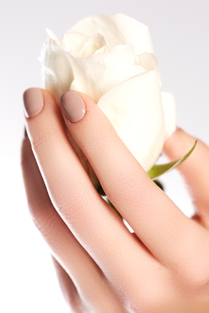 Beauty delicate hands with manicure holding flower rose isolated on white baclground. Beautiful female hands. Spa and manicure concept. Soft skin, skincare concept. Beauty nails.