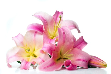 bouquet of large pink lilies with water drops isolated on white background