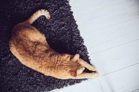 Photo pour Big ginger cat lying on a carpet on the floor, top view - image libre de droit