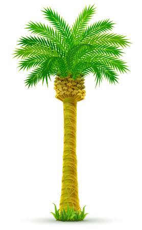 Ilustración de tropical palm tree with green leaves isolated - vector illustration - Imagen libre de derechos