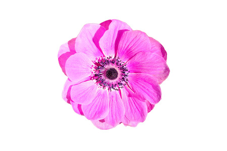 Pink flower from the top isolated on white background.
