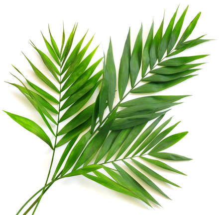 Photo for Palm leaves on white background. Minimal summertime concept. - Royalty Free Image
