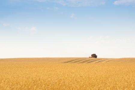 Photo pour grain harvester combine work in field  - image libre de droit
