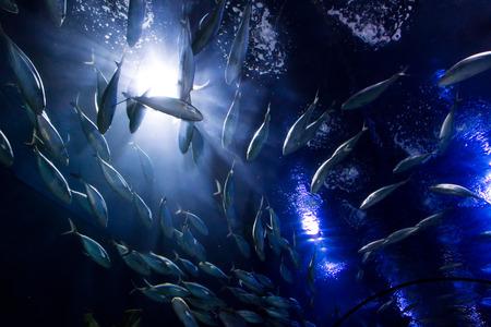 Photo pour shoal fish - image libre de droit