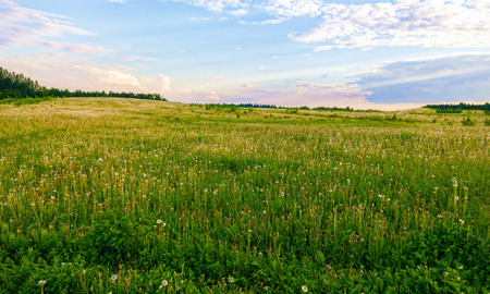 Photo pour Bright flowers of a yellow dandelion in a field. - image libre de droit