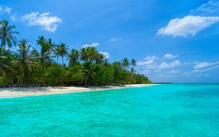 Photo pour Palm trees against the blue sky and white clouds. - image libre de droit