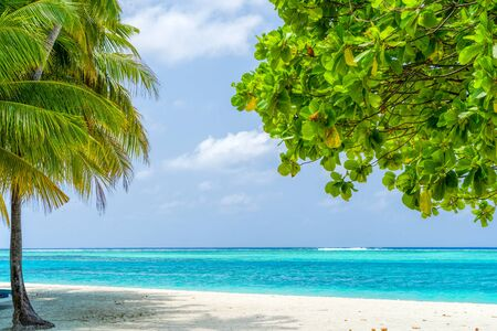 Photo for View of nice tropical beach with some palms - Royalty Free Image