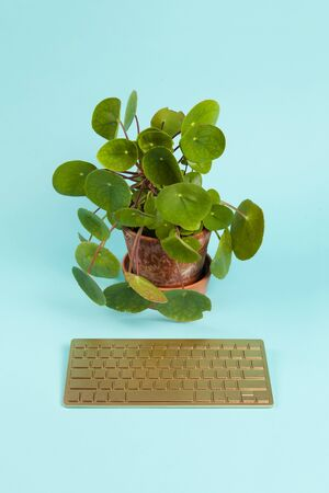 Photo pour a golden bluetooth keyboard used as a remote control for a pilea peperomioid plant placed in front of it, instead of the computer screen, on a plain turquoise background. Minimal still life color photography. - image libre de droit