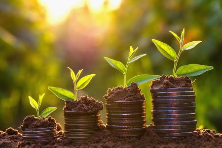 Foto de Money growing concept,Business success concept, Tree growing on pile of coins money - Imagen libre de derechos