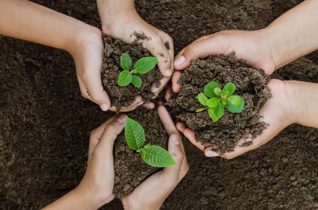 Foto de Growing concept eco Group hand  children planting together on soil backgroud - Imagen libre de derechos