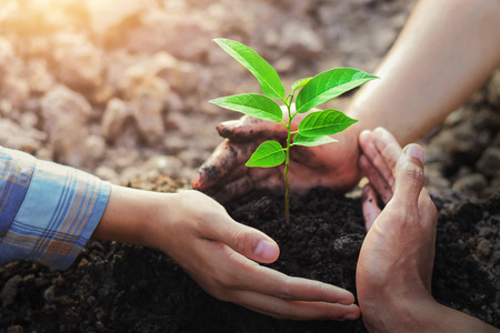 Foto de farmer three hand protection tree planting on soil with sunshine in garden - Imagen libre de derechos