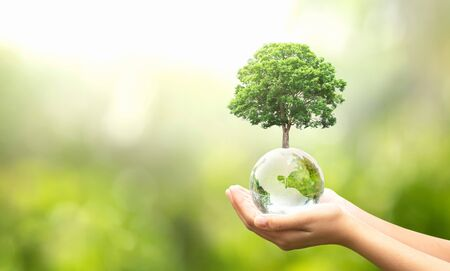 Foto de hand holding glass globe ball with tree growing and green nature blur background. eco concept - Imagen libre de derechos