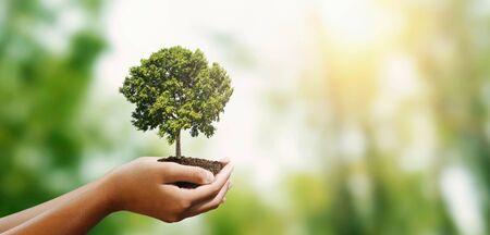 Foto de woman hand holding tree on blur green nature background. concept eco earth day - Imagen libre de derechos