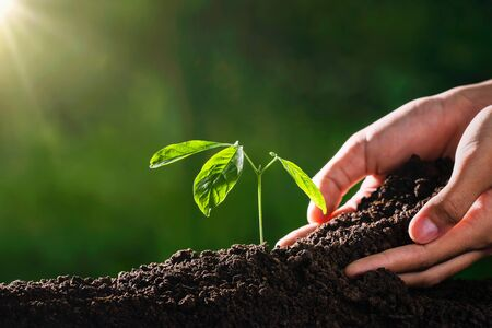 Photo pour plant growing with hand and sunshine in garden. eco environment concept - image libre de droit