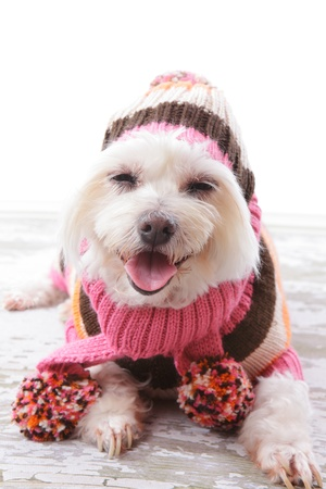 Happy dog wearing a warm woollen turtleneck sweater, scarf and matching beanie hat with pom poms in colours of pink, orange, white and brown.