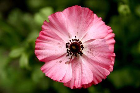 beauty, flowering, blooming, plants