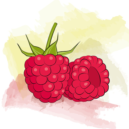 raspberry on watercolor background