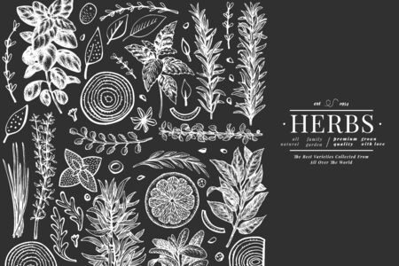 Illustration pour Culinary herbs banner template. Hand drawn botanical illustration on chalk board. Engraved style. Vintage food background. - image libre de droit