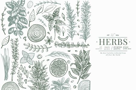 Illustration pour Culinary herbs banner template. Hand drawn botanical illustration. Engraved style. Vintage food background. - image libre de droit