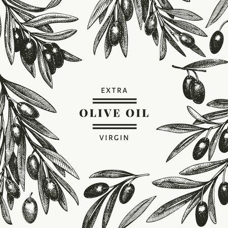 Illustration for Olive branch design template. Hand drawn vector food illustration. Engraved style mediterranean plant. Vintage botanical picture. - Royalty Free Image