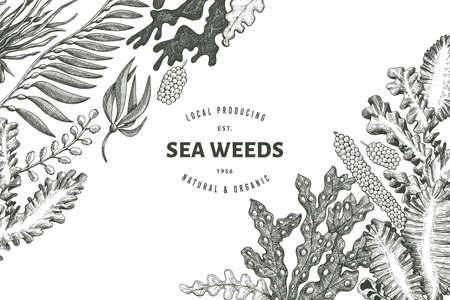 Illustration pour Seaweed design template. Hand drawn vector seaweeds illustration. Engraved style sea food banner. Retro sea plants background - image libre de droit
